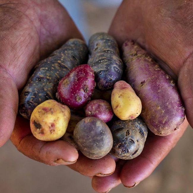Cultivos Andinos